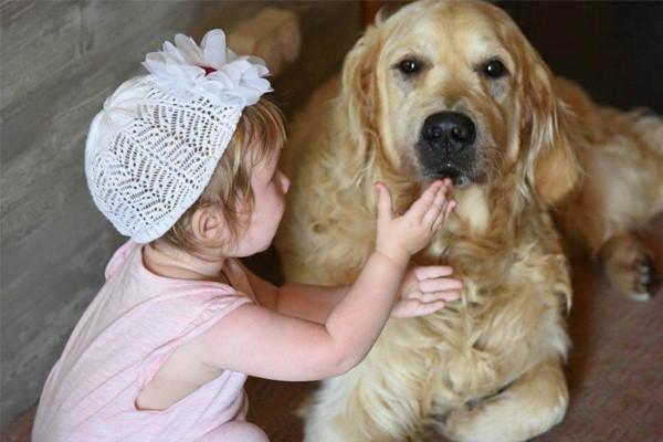 Leo, il cucciolo di Golden Retriever che ha aiutato un bambino in terapia intensiva