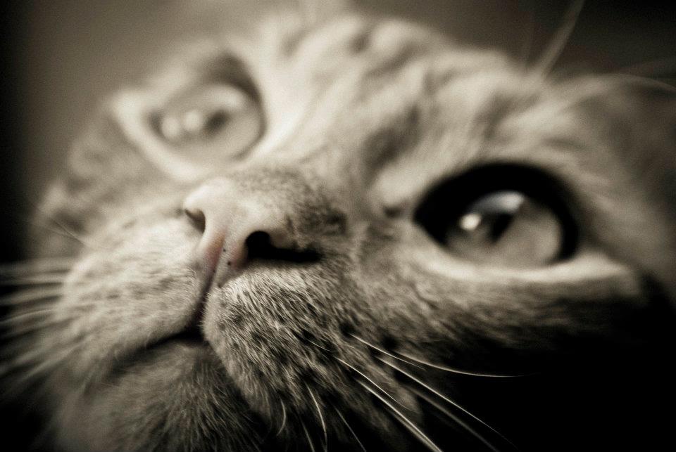 La magia negli occhi di un gatto