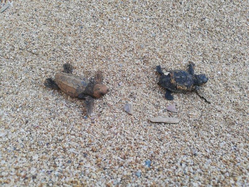 L'estate delle tartarughe