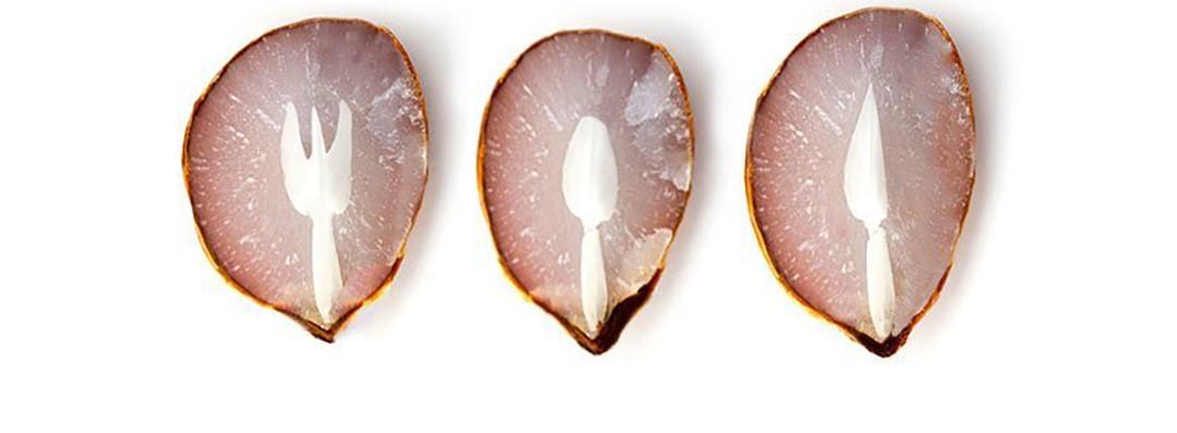 La sagoma di forchetta cucchiaio e coltello nel seme del cachi