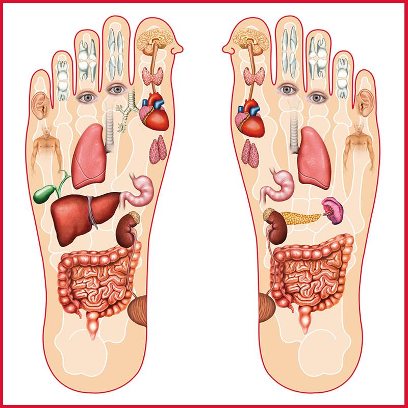 mappa del piede e corrispondenza con organi del corpo