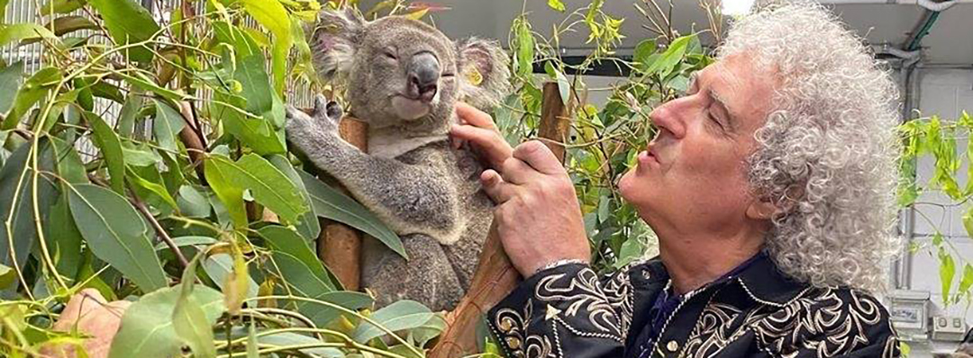 Brian may con un piccolo Koala